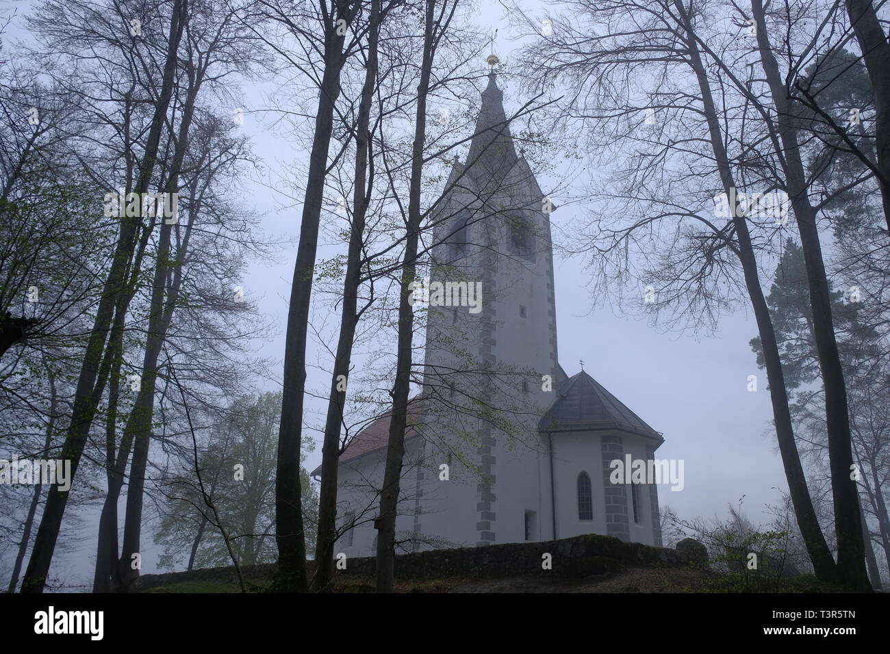 sv-magdalena-church-at-top-of-a-hill-on-forest-on-a-foggy-misty-morning-view-from-low-through-the-trees-in-slovenia-T3R5TN.jpg