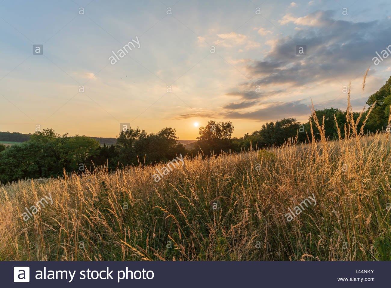 Countryside of the Chiltern Hills in England at sunset Stock Photo