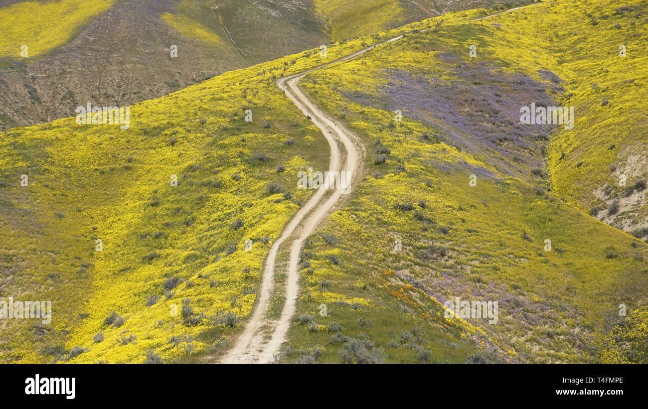 Super Bloom 2019, Carizzo Plain National Monument, California, USA Stock Photo