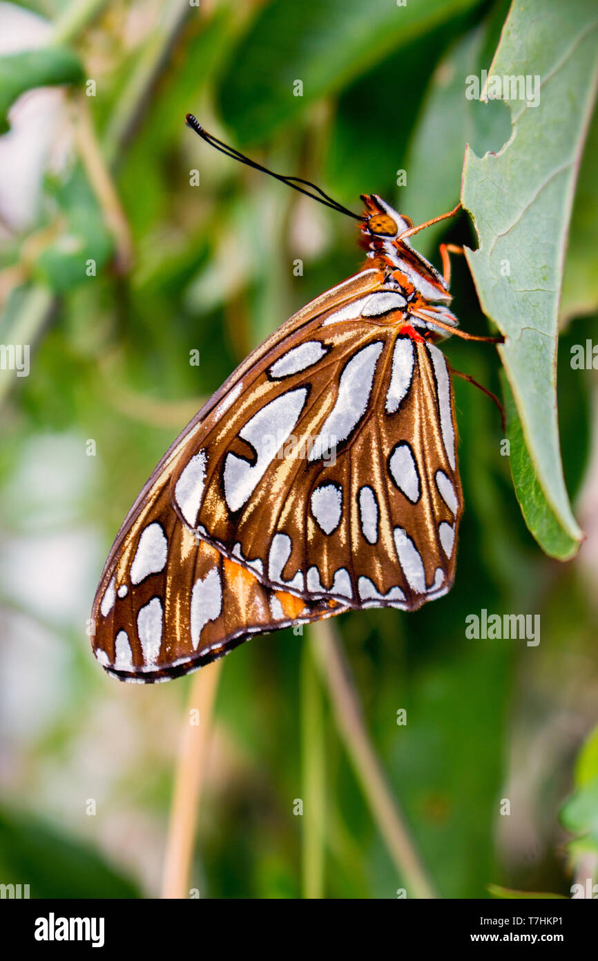 Beautiful butterfly on leaf Stock Photo