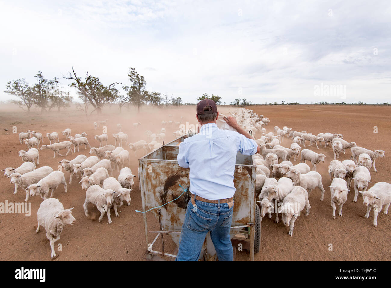 May 2019 Burren Junction, Australia: Farmer Richard Marshall delivers grain to his sheep in a dry and drought ravaged paddock. Stock Photo
