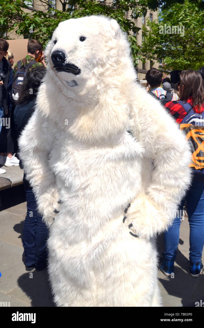 A person in a polar bear suit, with hands on hips, at the Manchester Youth Strike 4 Climate protest on 24th May, 2019, in Manchester, uk Stock Photo
