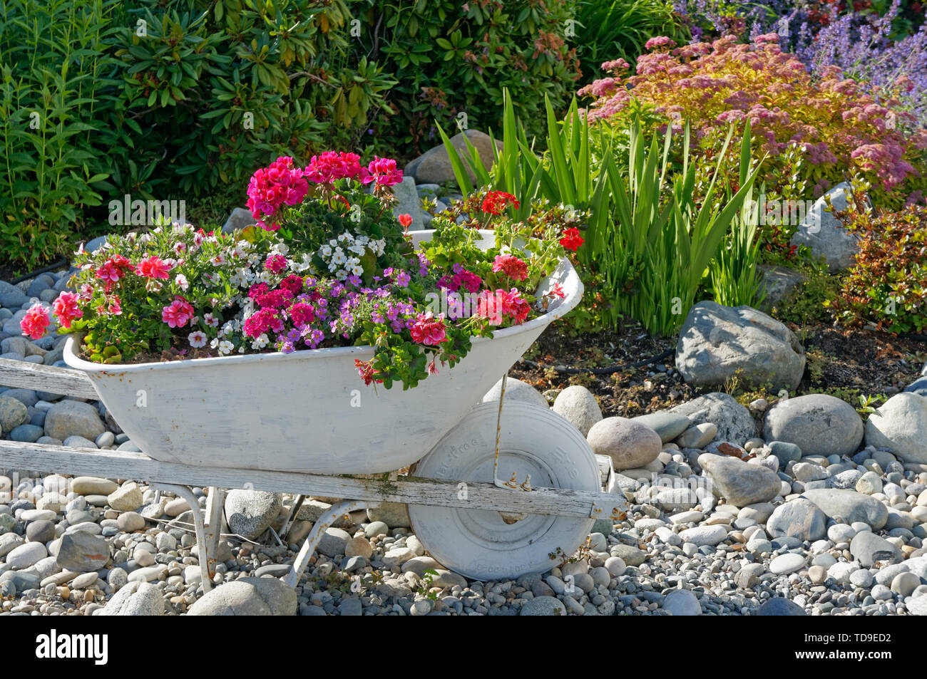 old-wheelbarrow-painted-white-and-being-