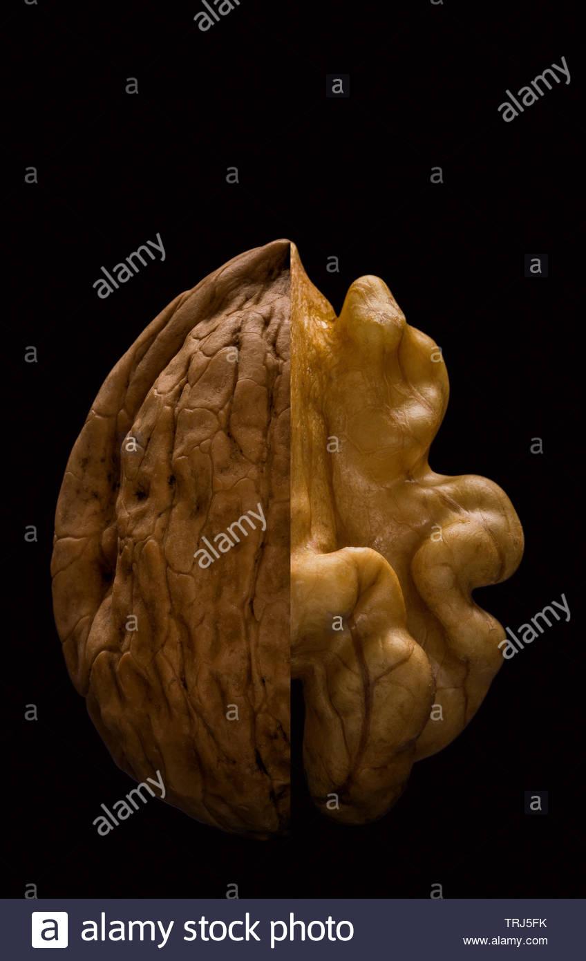 walnut-kernel-and-nutshell-juglans-regia