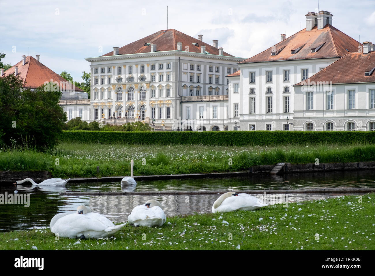 may-2019-mute-swans-gather-in-front-of-schloss-nymphenburg-in-munich-germany-TRKK0B.jpg