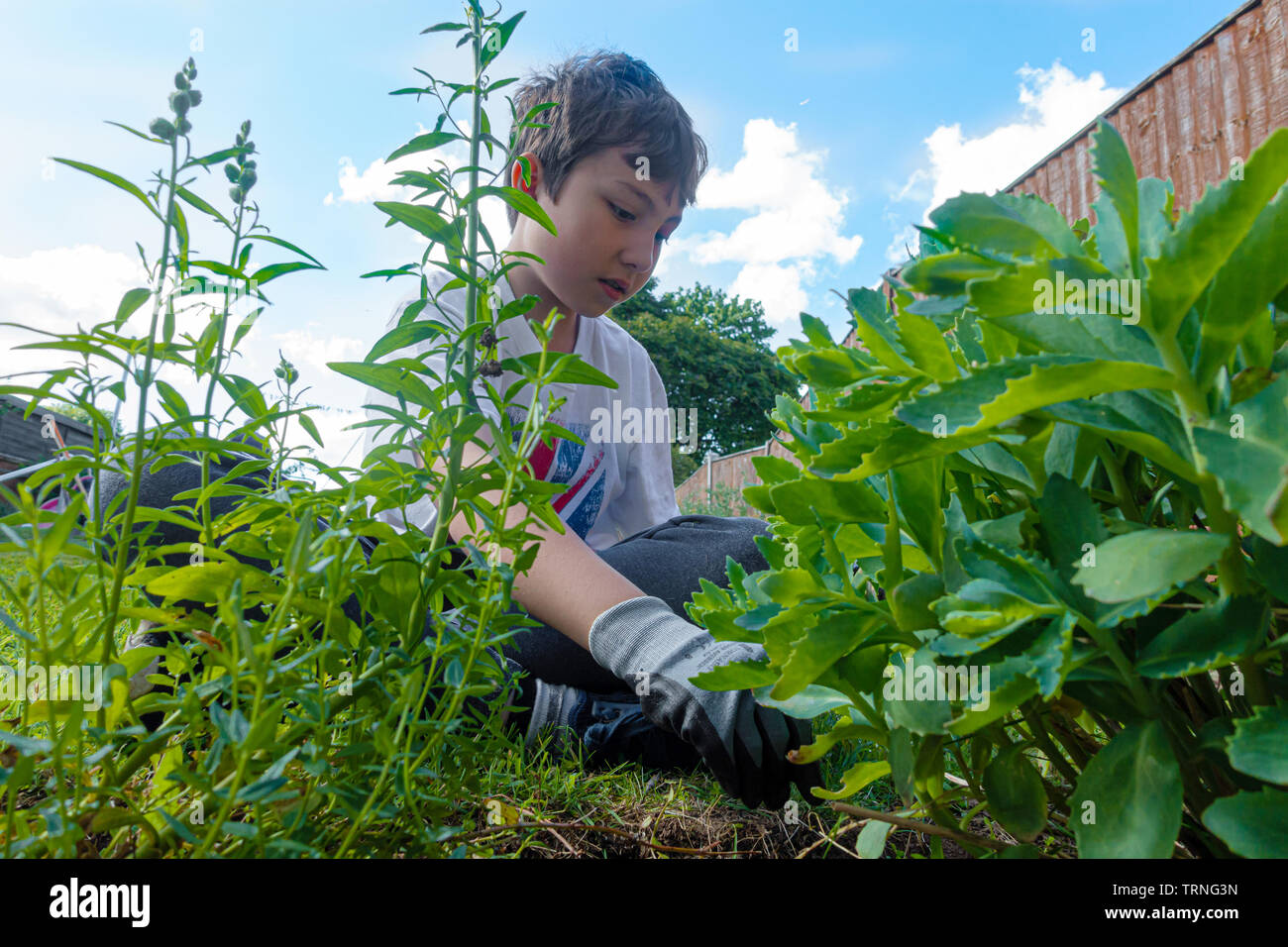 a-young-boy-helping-doing-weeding-gardening-outside-in-the-garden-TRNG3N.jpg