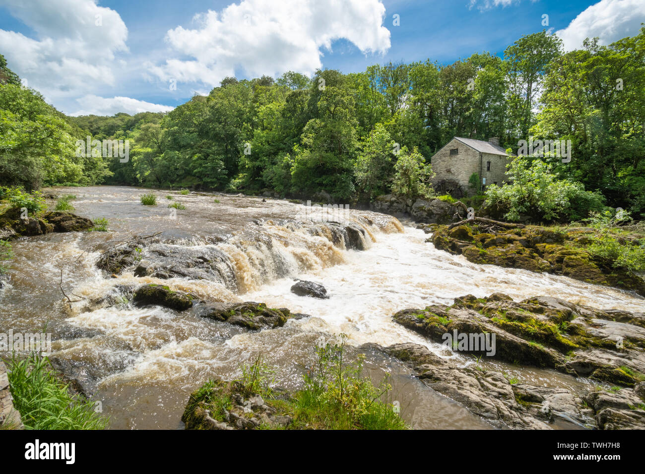 the-falls-waterfalls-on-the-river-teifi-at-the-village-of-cenarth-in-carmarthenshire-wales-uk-TWH7H8.jpg