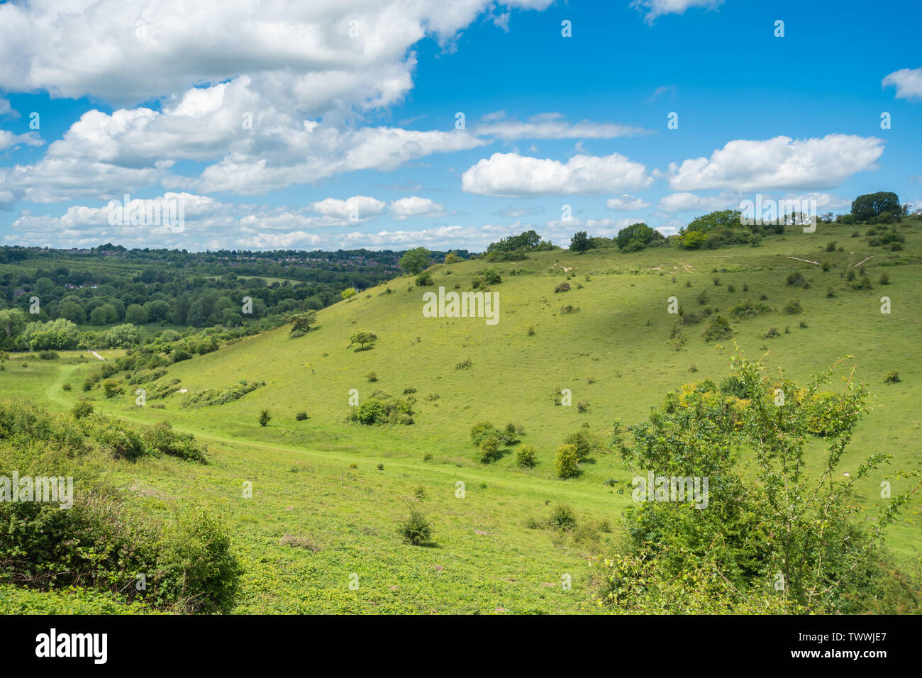 st-catherines-hill-landscape-view-in-the-south-downs-national-park-hampshire-uk-on-a-sunny-summer-day-TWWJE7.jpg