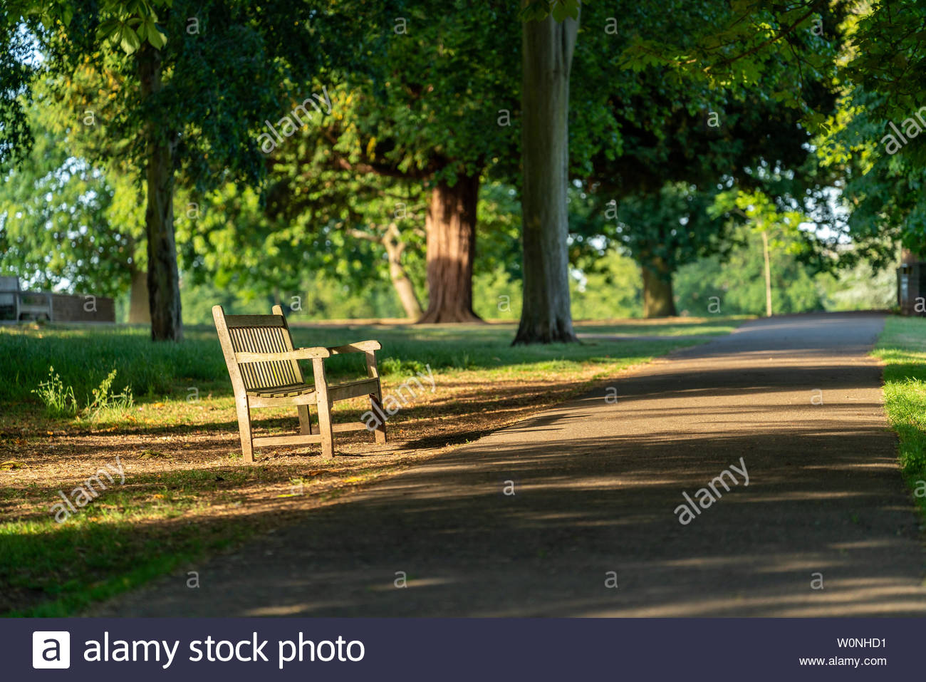 An empty bench in Marble Hill park in Twickenham, West London Stock Photo