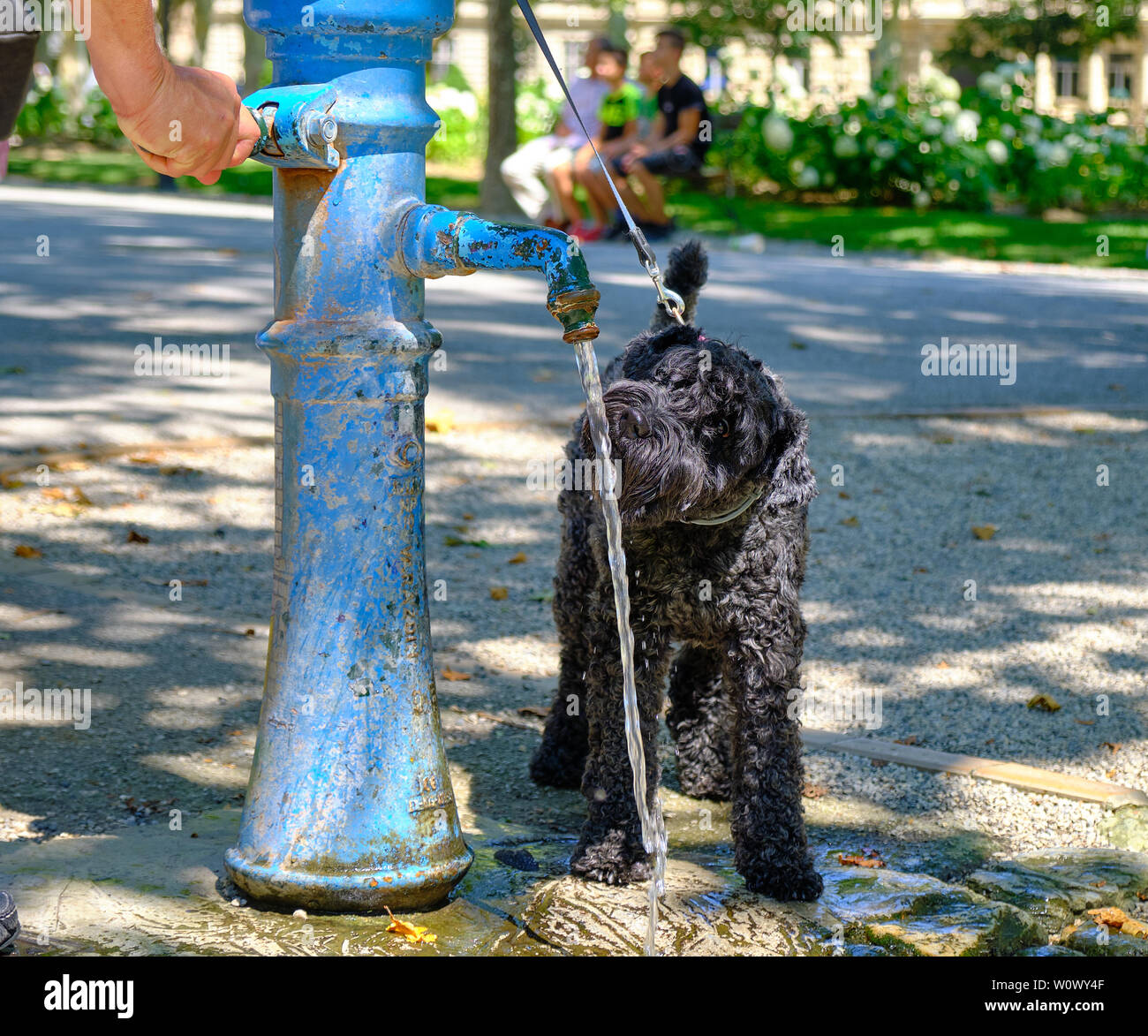 Black dog drinking from a public fountain in a park, to hydrate during the heat wave in Europe Stock Photo