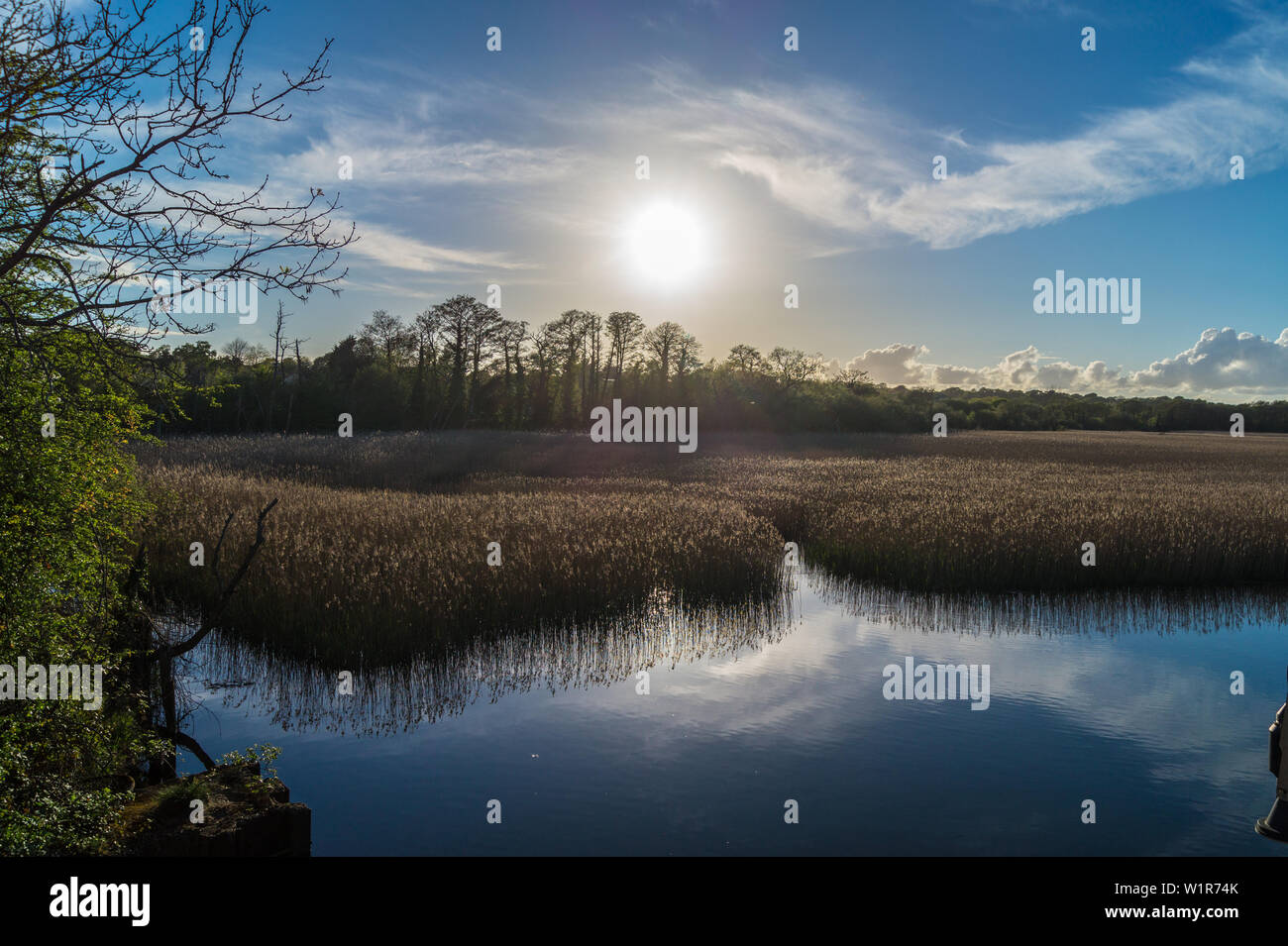 lymington-river-site-of-special-scientific-interest-sssi-lymington-hampshire-england-W1R74K.jpg