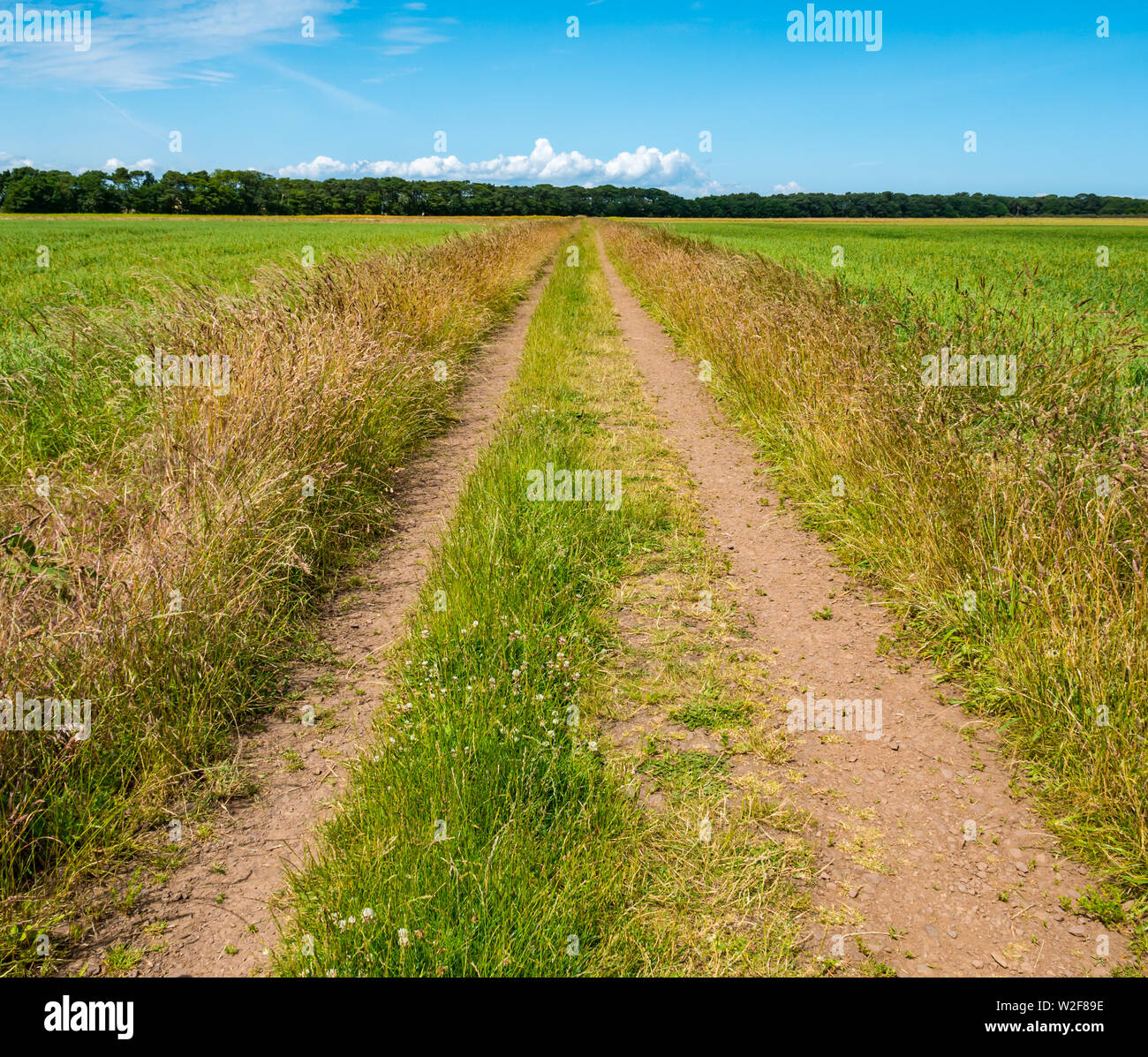 straight-track-leading-into-distance-to-