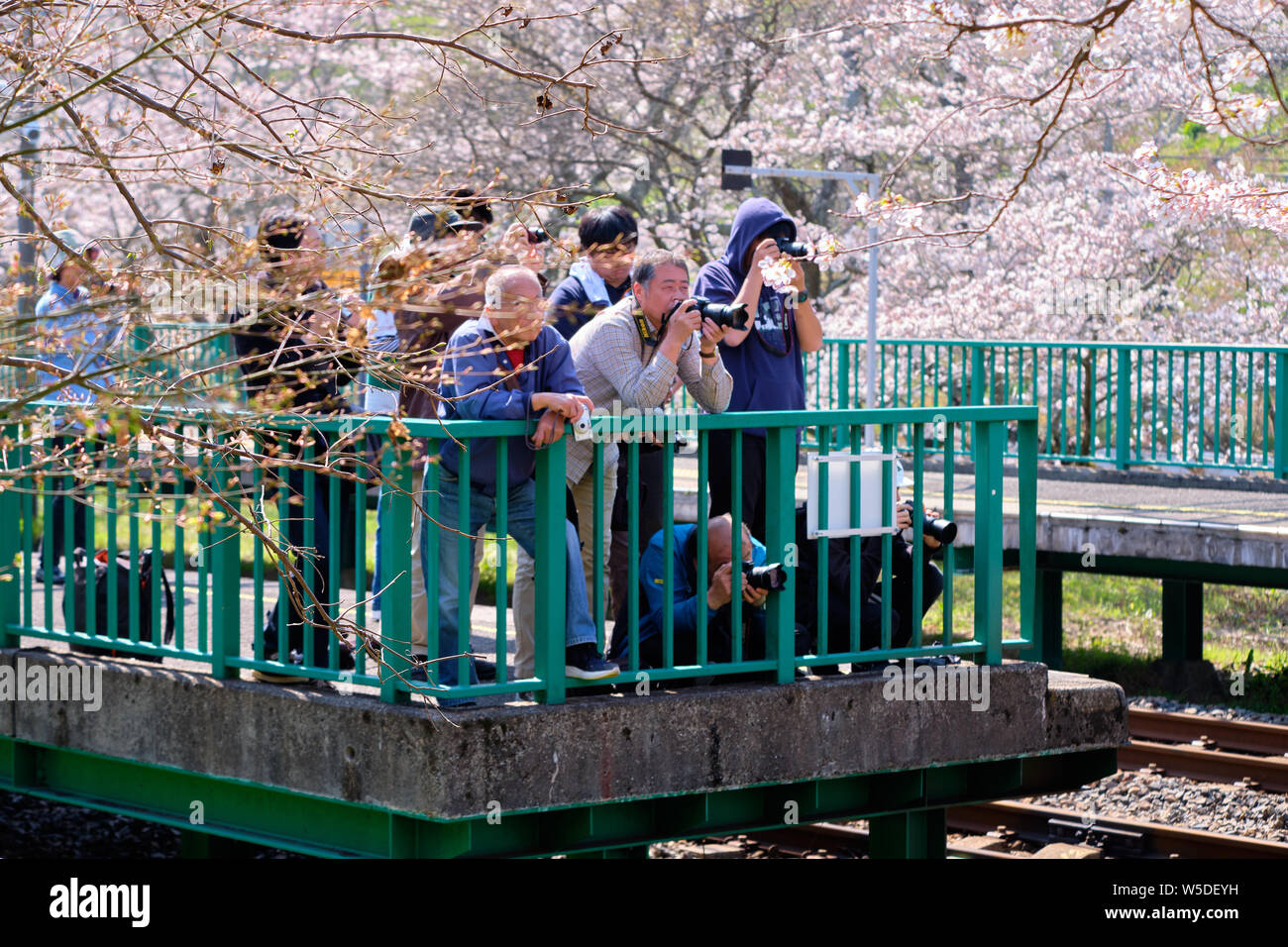 wakayama-prefecture-japan-large-group-of-amateur-photographers-waiting-for-train-to-come-around-bend-during-cherry-blossom-season-W5DEYH.jpg