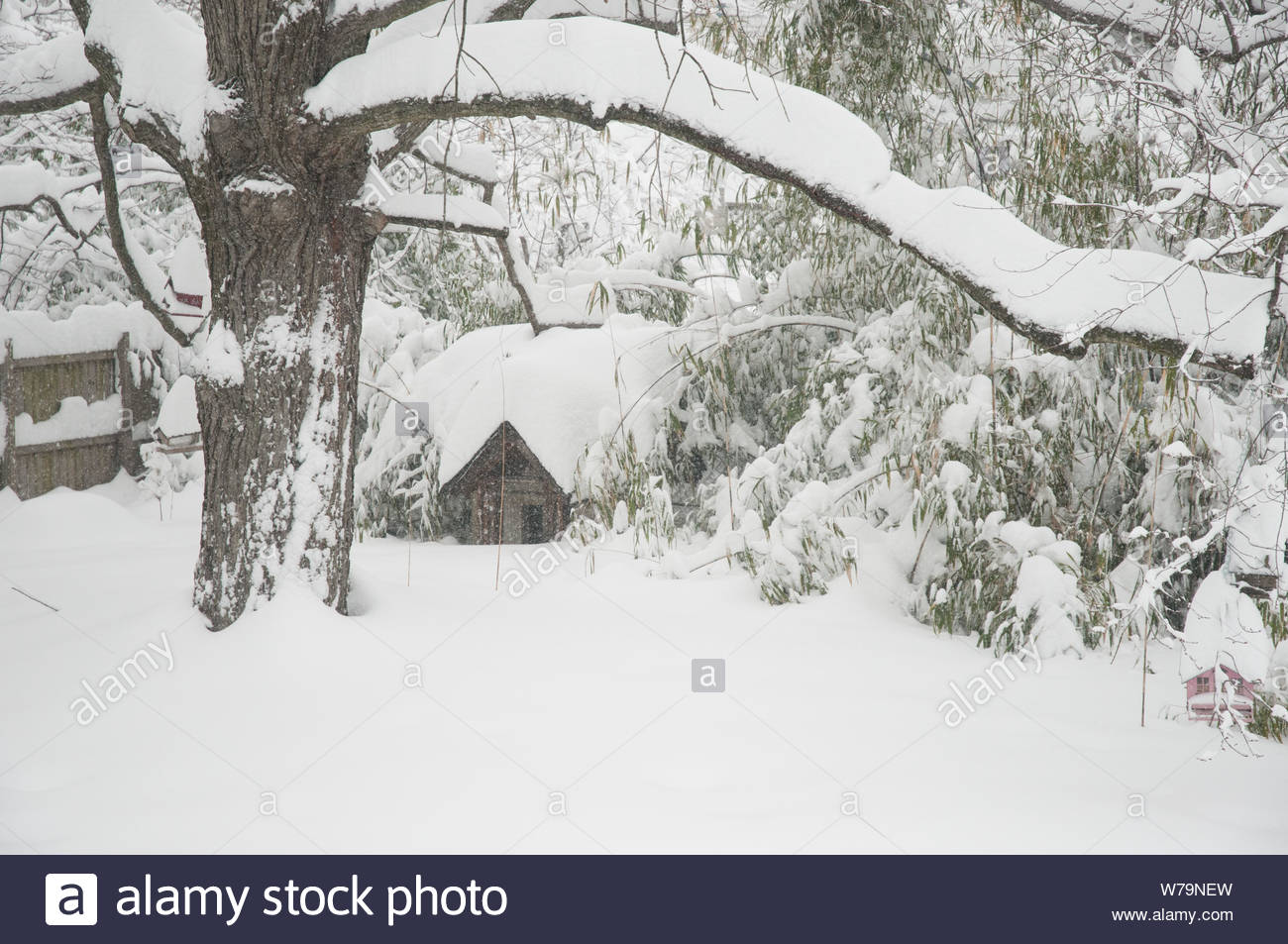 After a blizzard in the Washington, DC, area, trees show several inches of snow accumulation Stock Photo