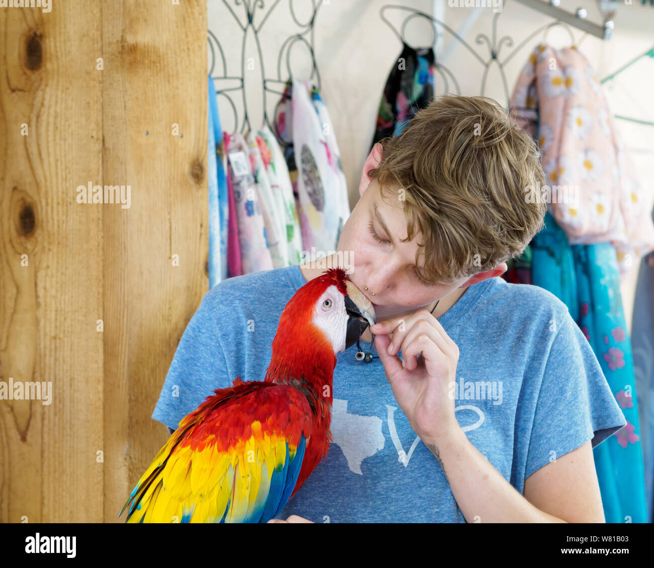 a-young-female-volunteer-kisses-the-beak-of-a-scarlet-macaw-ara-macao-in-the-gift-shop-of-the-south-texas-botanical-gardens-nature-center-W81B03.jpg