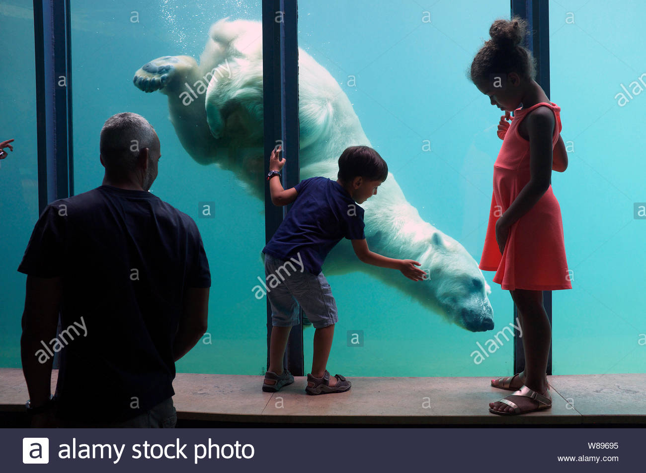 Children marvel at the polar bear swimming underwater in its enclosure. Budapest Zoo, Hungary. Stock Photo