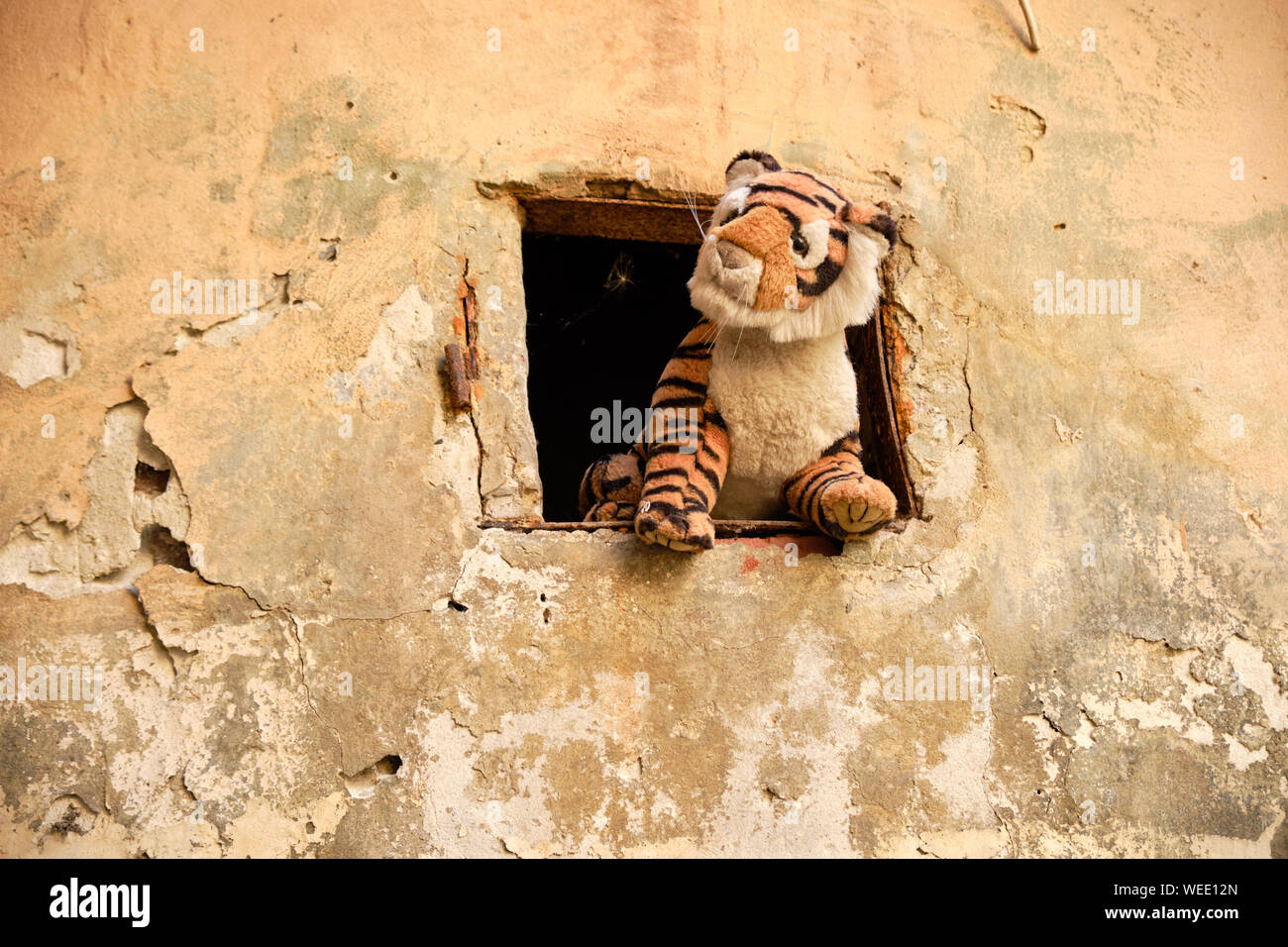 stuffed-tiger-sticking-out-window-from-animals-in-the-yard-of-lost-toys-in-lviv-ukraine-WEE12N.jpg