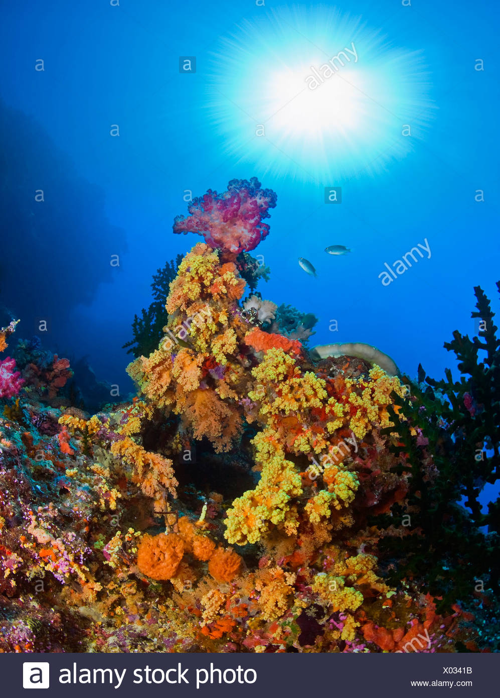 Underwater starburst streaming down on soft corals, Fiji - Stock Image
