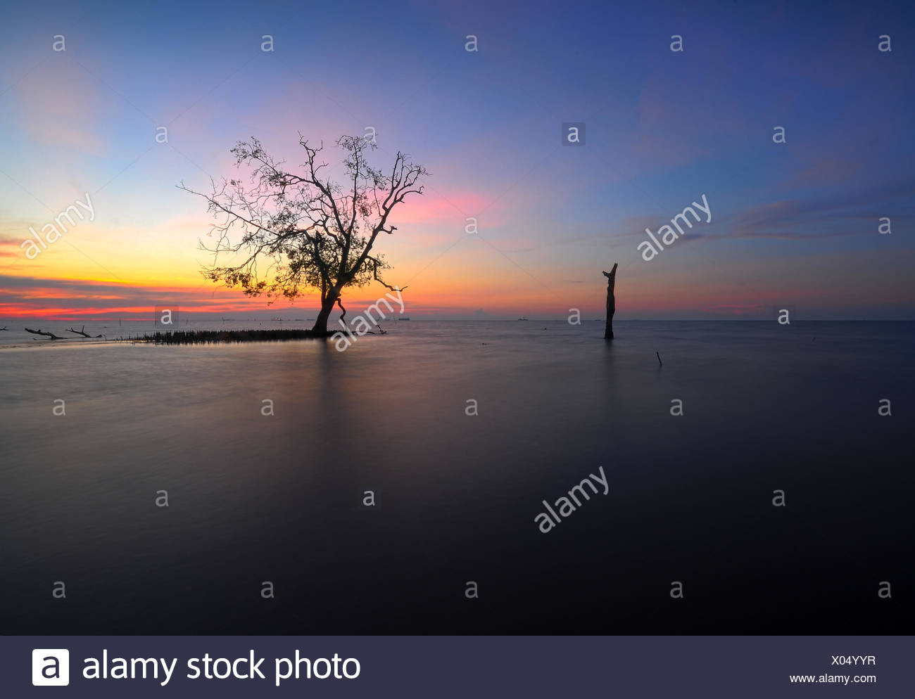 Malaysia, Selangor, Banting, Single tree on Kelanang Beach at sunset - Stock Image