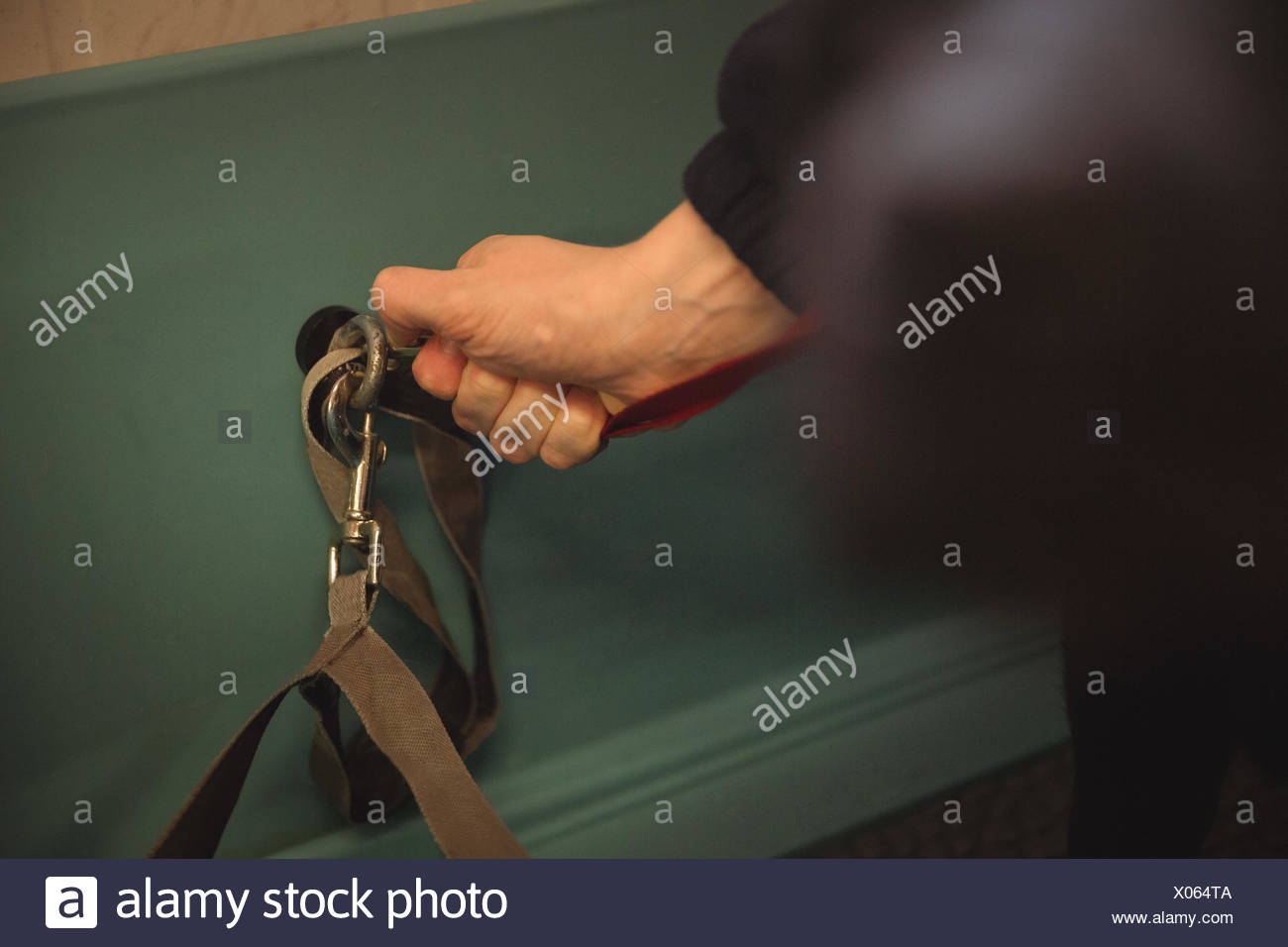 Woman connecting dog lead on hook in bathtub - Stock Image