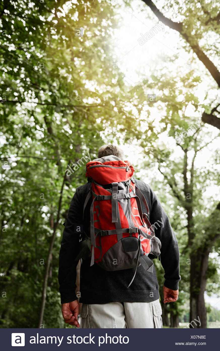 Senior man walking in forest, carrying backpack, rear view - Stock Image