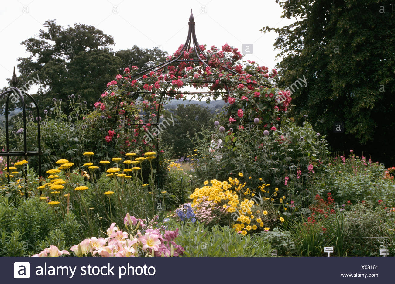 pink climbing roses on ornate metal gazebo in border with yellow