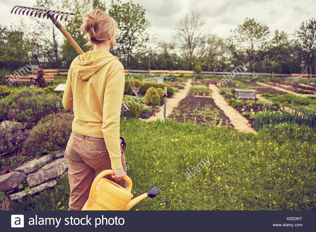 Mature woman, gardening, carrying rake and watering can, rear view - Stock Image
