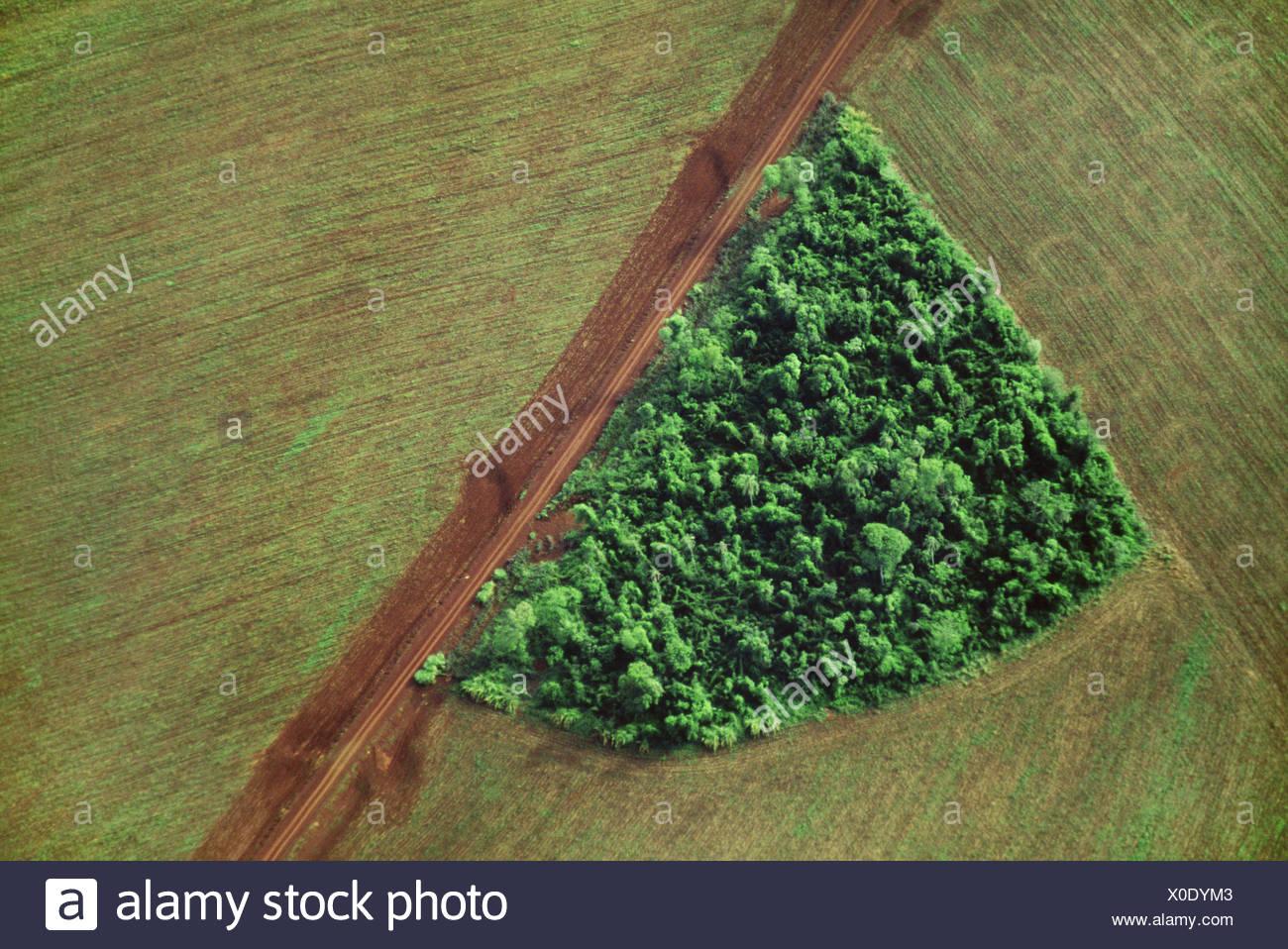 Iguacu National Park Brazil Rainforest remnant Iguacu National Park Brazil - Stock Image