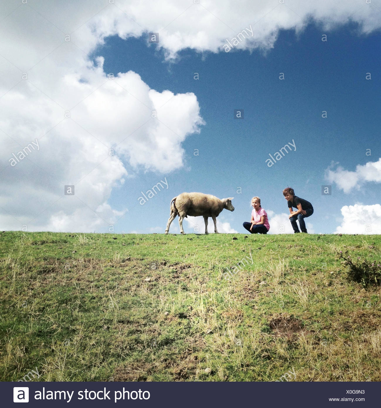 Two children with sheep - Stock Image