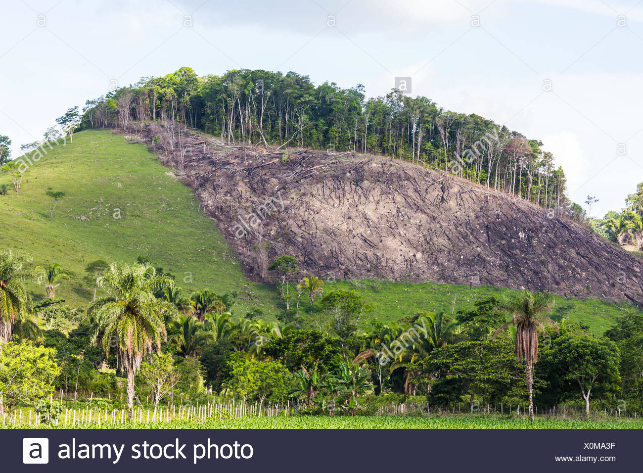 Deforestation in Guatemala. - Stock Image