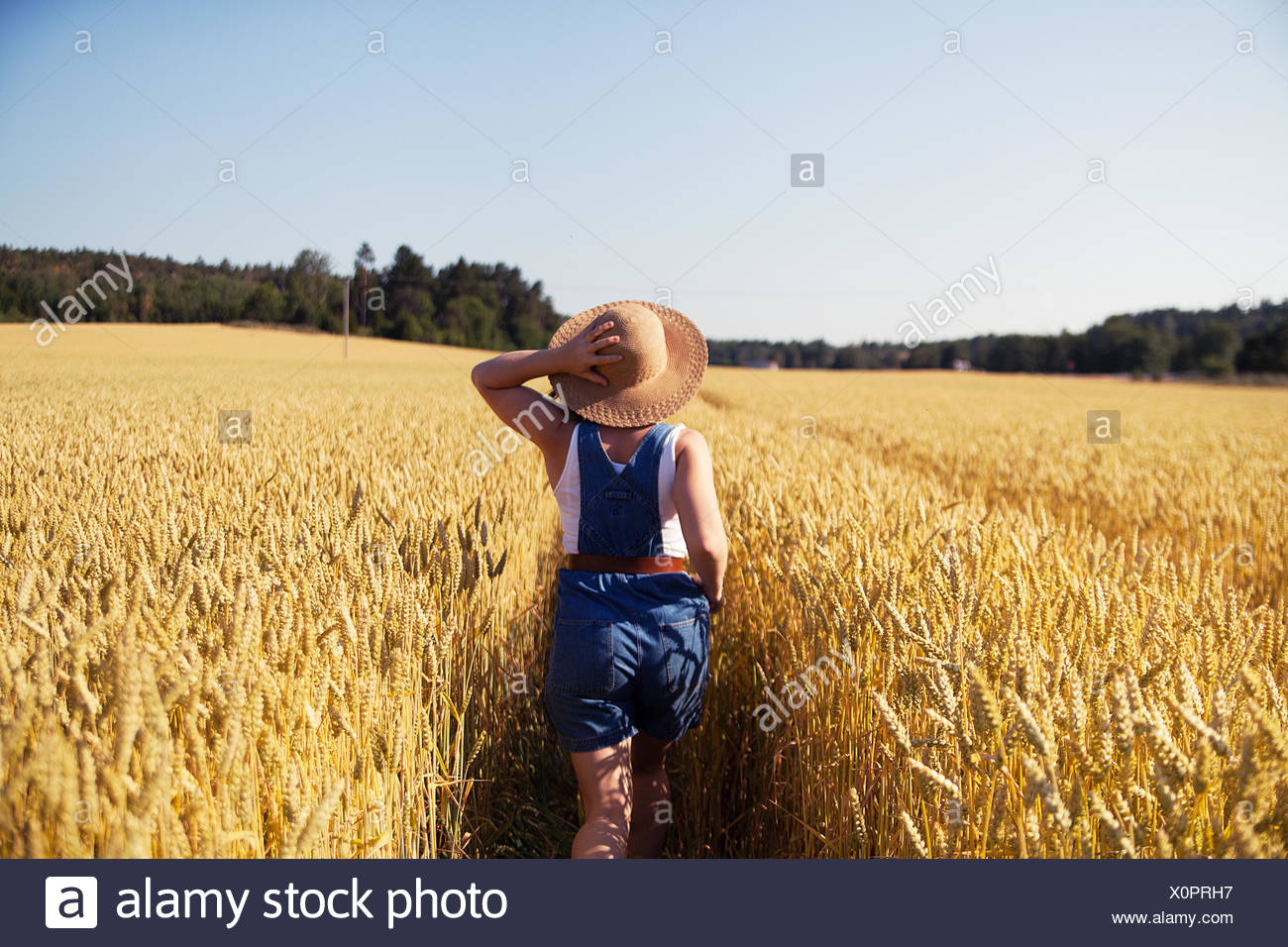 Rear view of young woman strolling in wheat field holding onto straw hat - Stock Image