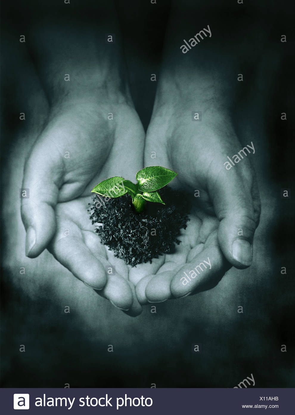 Seedling In Palm Of A Person'S Hands - Stock Image