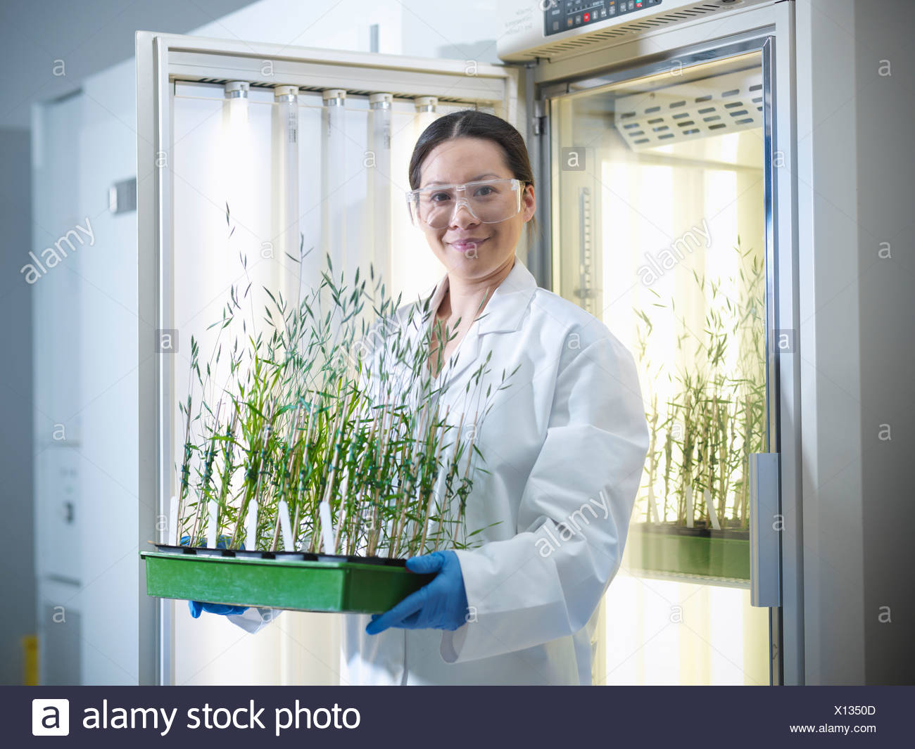Scientist carrying potted plants in lab - Stock Image