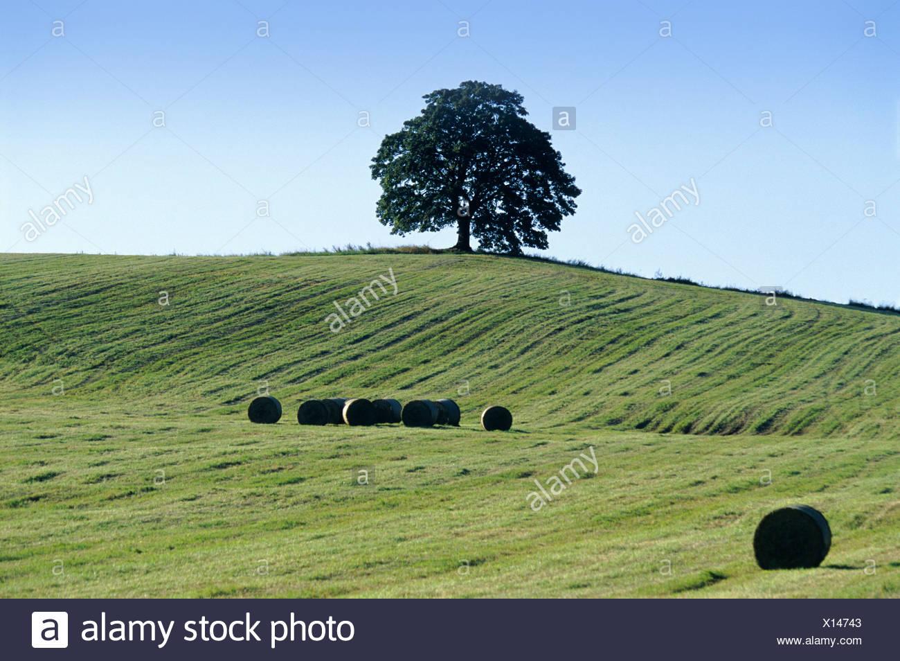 Agribusiness Agriculture Agronomy Bohemia Business Color Colour Crop Cultivation Culture Czech Republic Cze - Stock Image