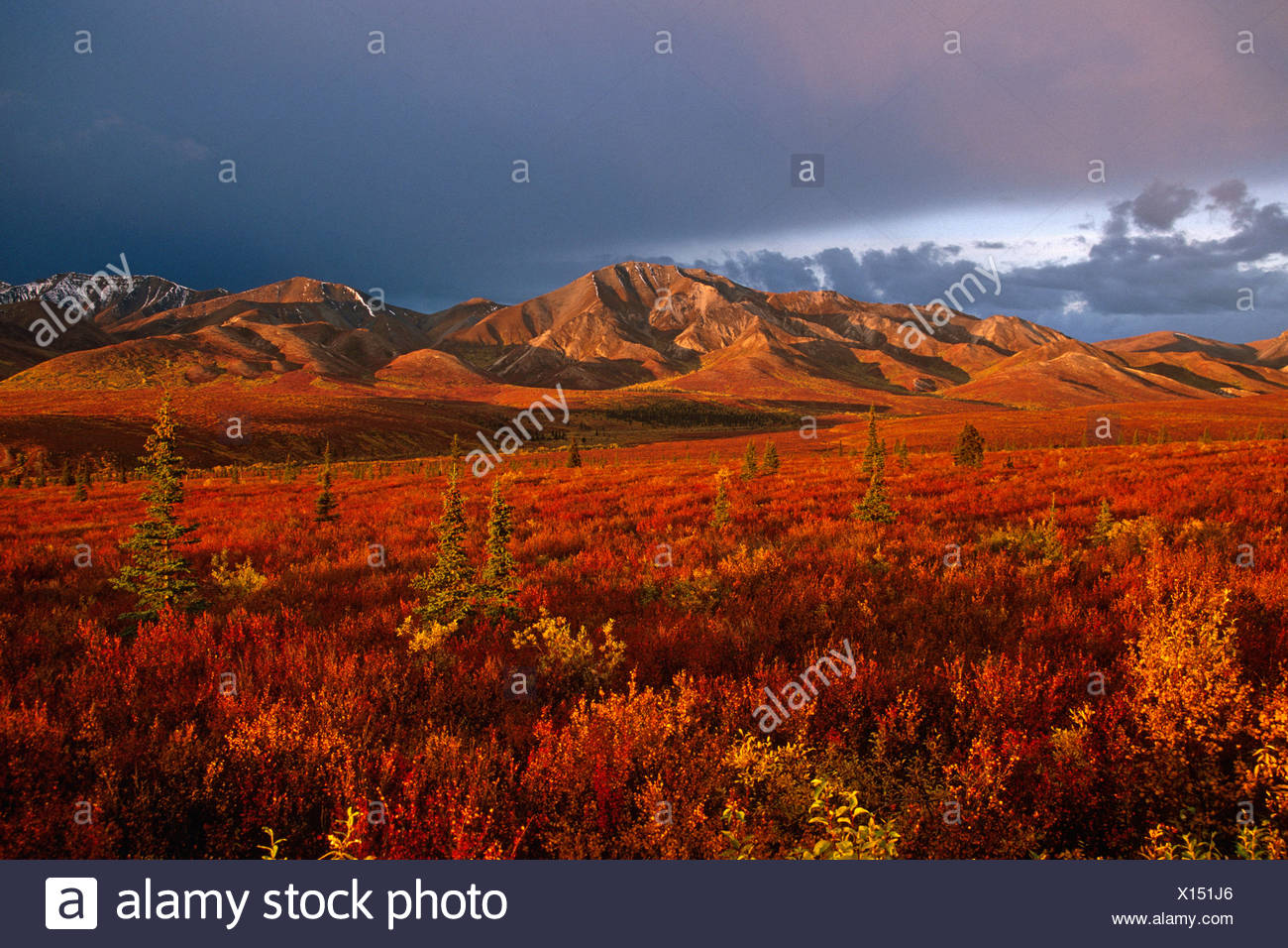 Afternoon sunlight on Tundra Denali NP SC AK Fall scenic - Stock Image