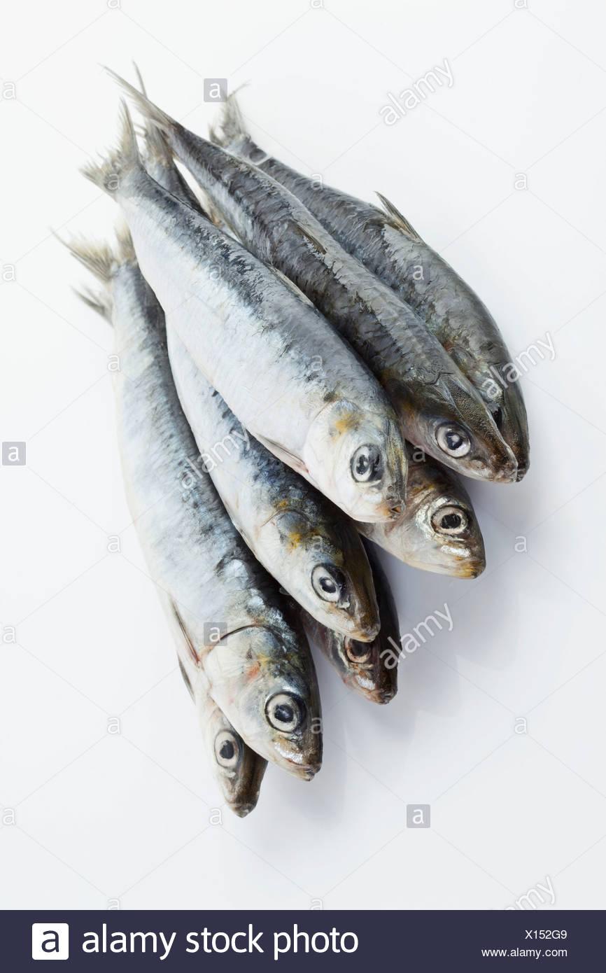Sardines on white background - Stock Image