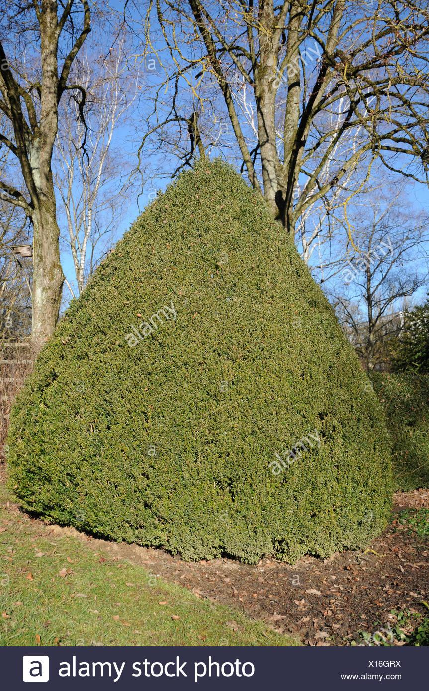 Vistoso Marcos Topiary Festooning - Ideas Personalizadas de Marco de ...