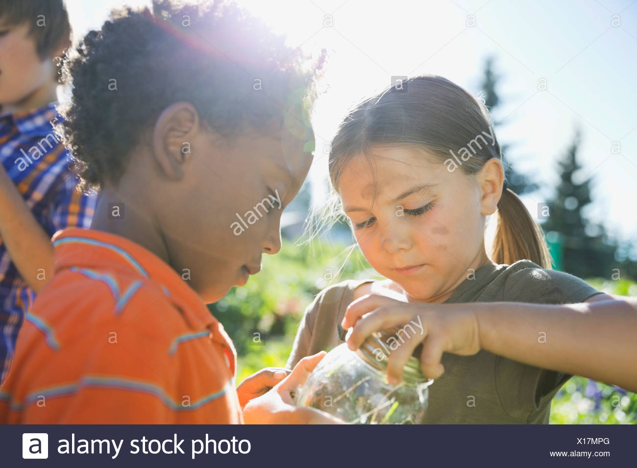 Children catching garden bugs in jar - Stock Image