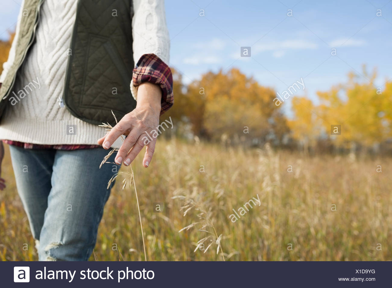 Woman walking in autumn field touching tall grass - Stock Image