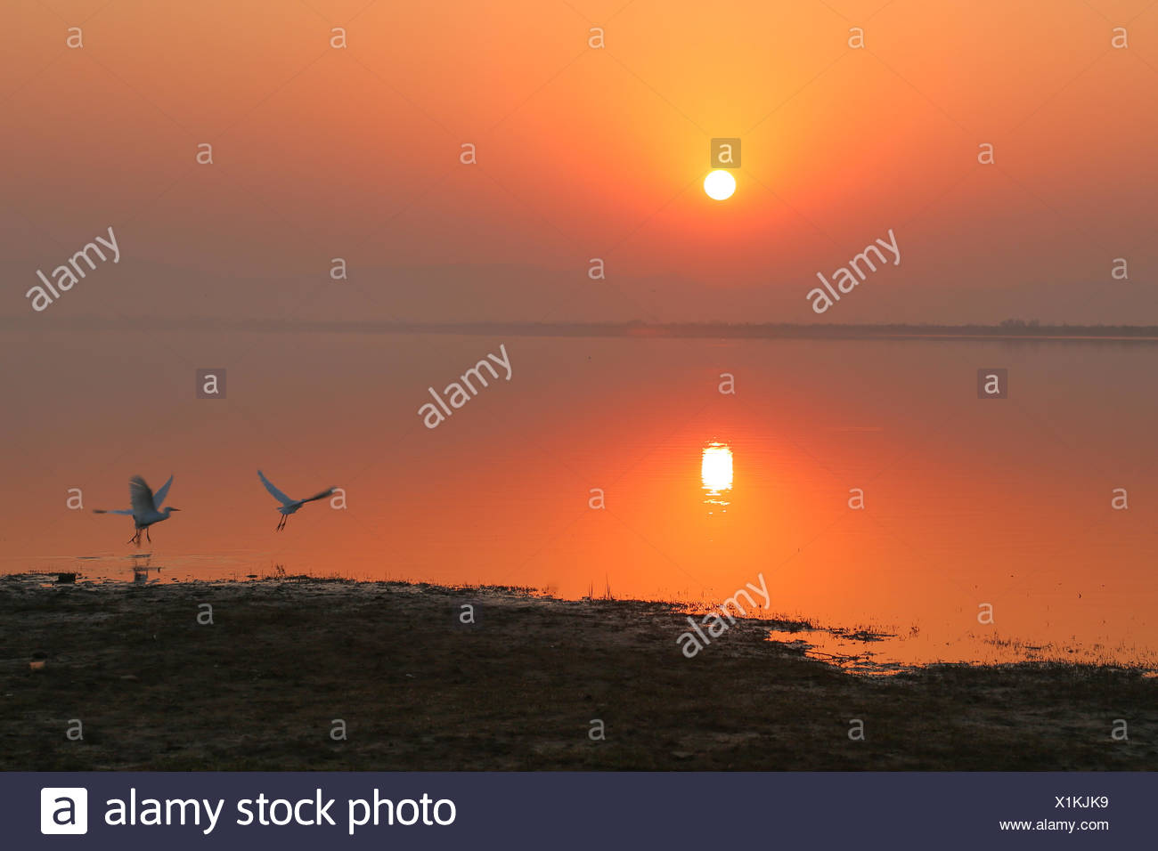 Birds taking off at sunset - Stock Image