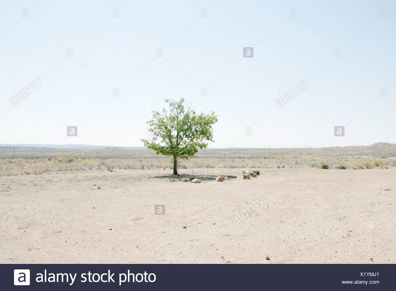 Lone tree in desert landscape - Stock Image
