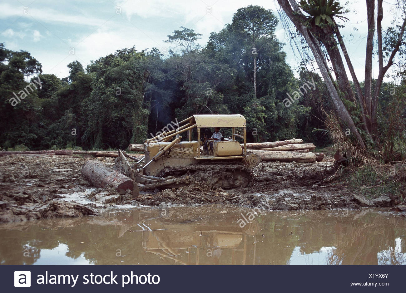 rainforest destruction Indonesia Borneo Stock Photo 276593827