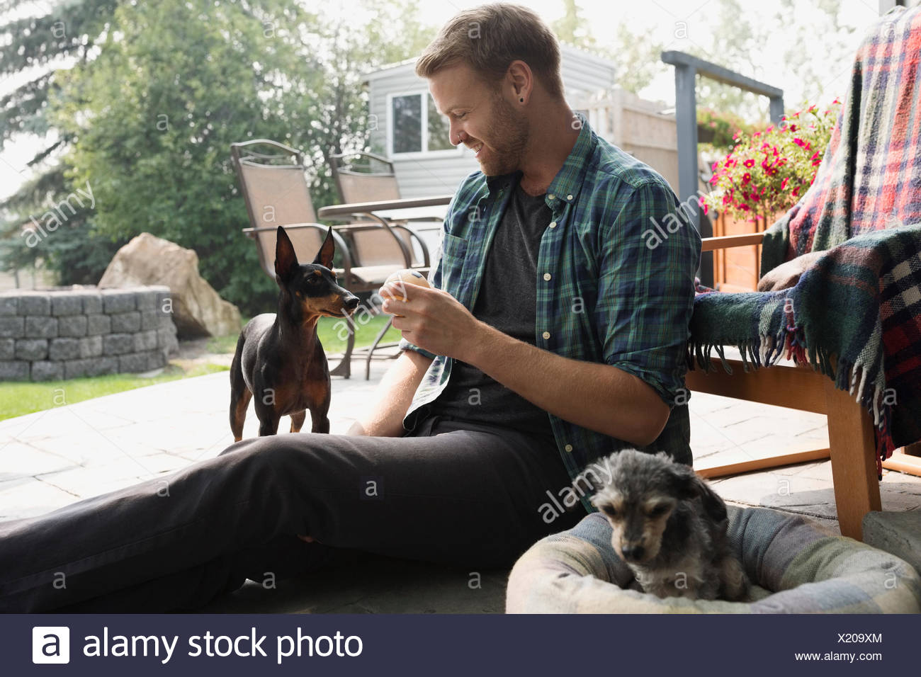 Man holding tennis ball for dog on patio - Stock Image