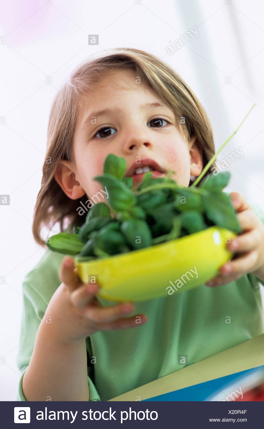 Boy (3-4) holding bowl of fresh basil, close-up, portrait - Stock Image