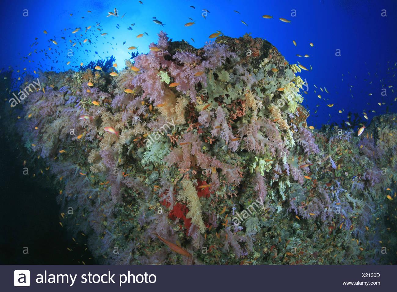 Großzügig Korallen Färbung Seite Bilder - Malvorlagen Von Tieren ...
