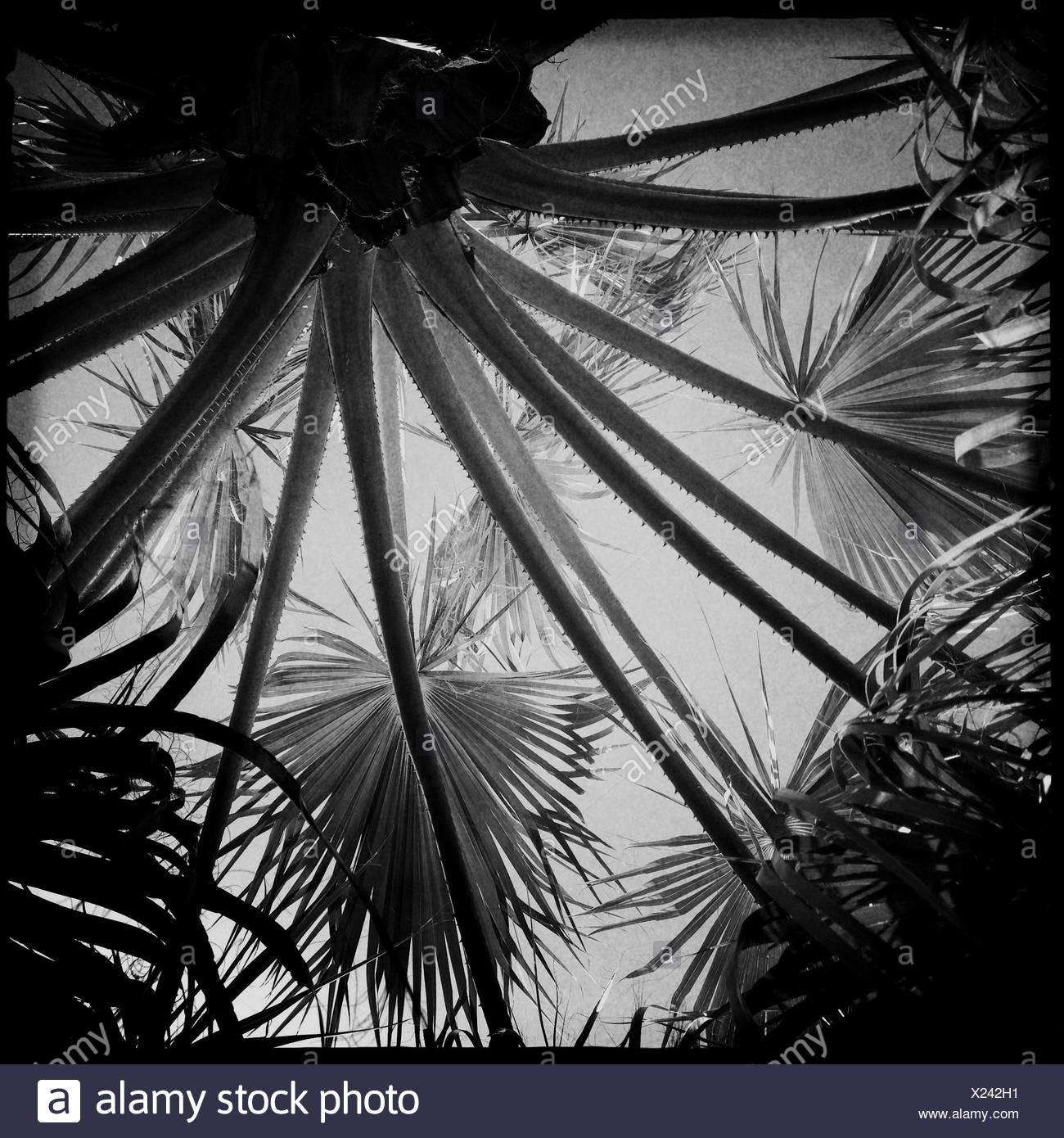 United Arab Emirates, Abu Dhabi, Palm trees - Stock Image
