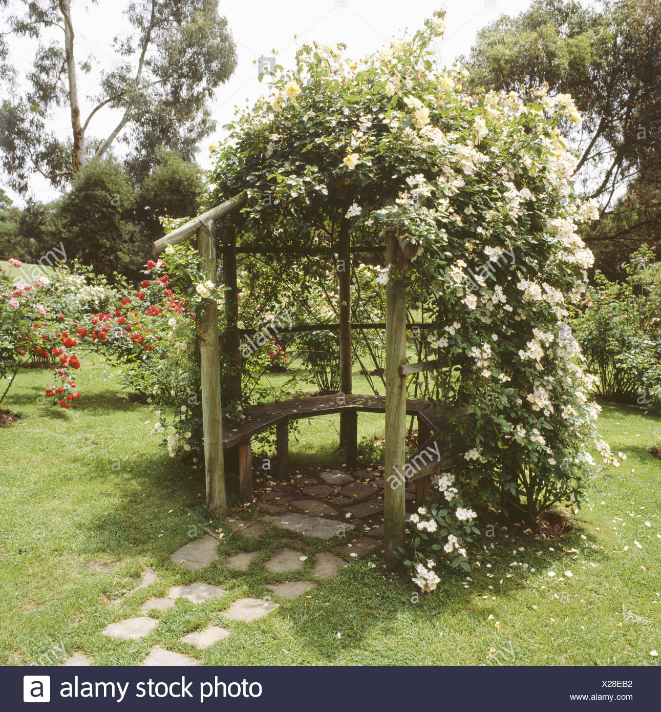 White climbing roses on curved wooden arbour with integral bench on ...