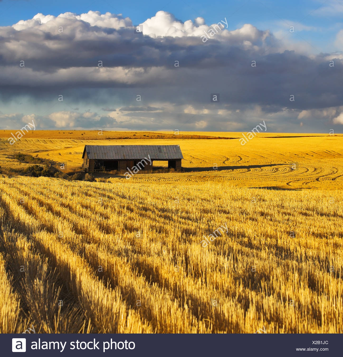 The field after harvesting - Stock Image