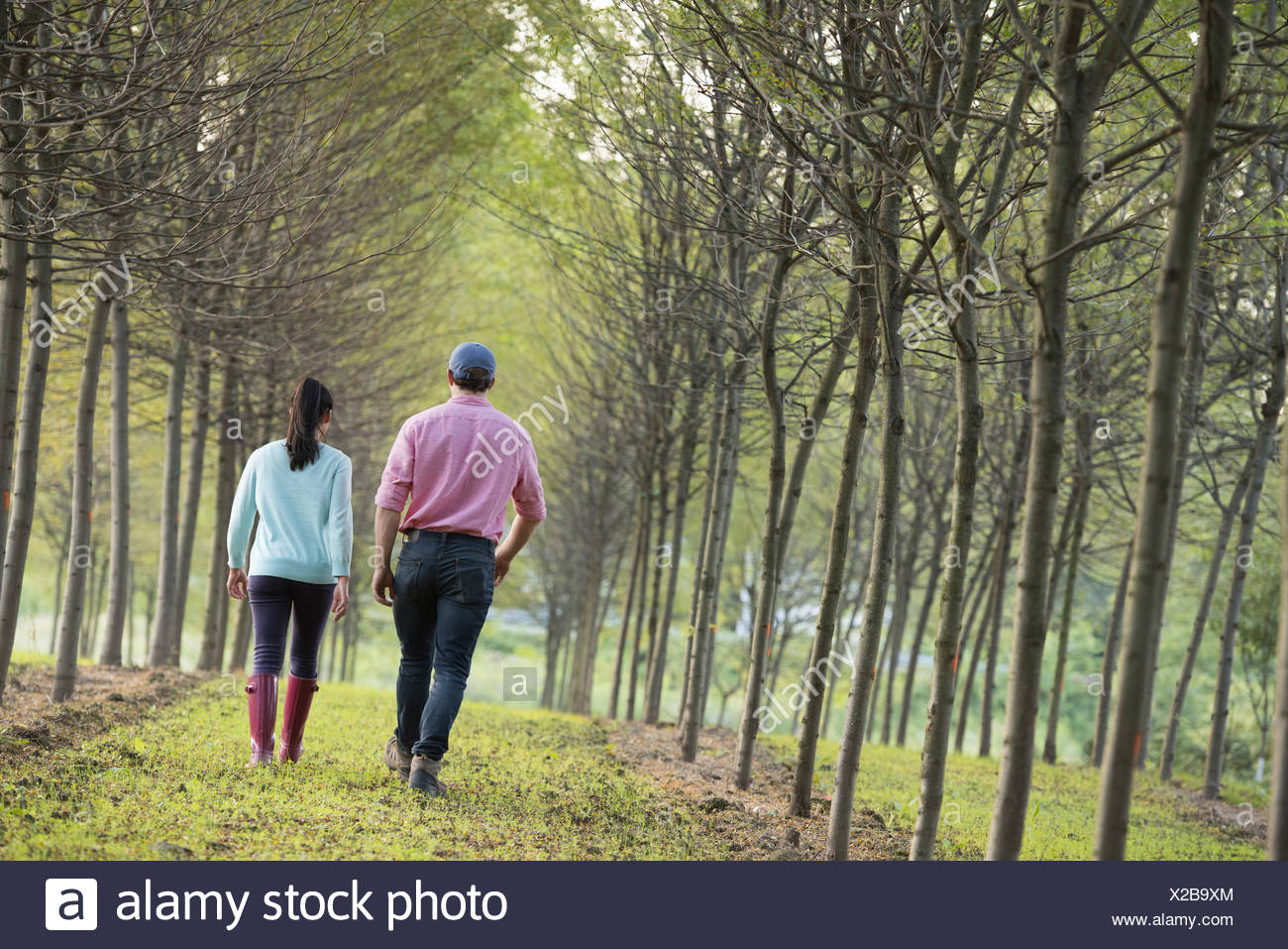 A couple walking between two rows of trees. - Stock Image