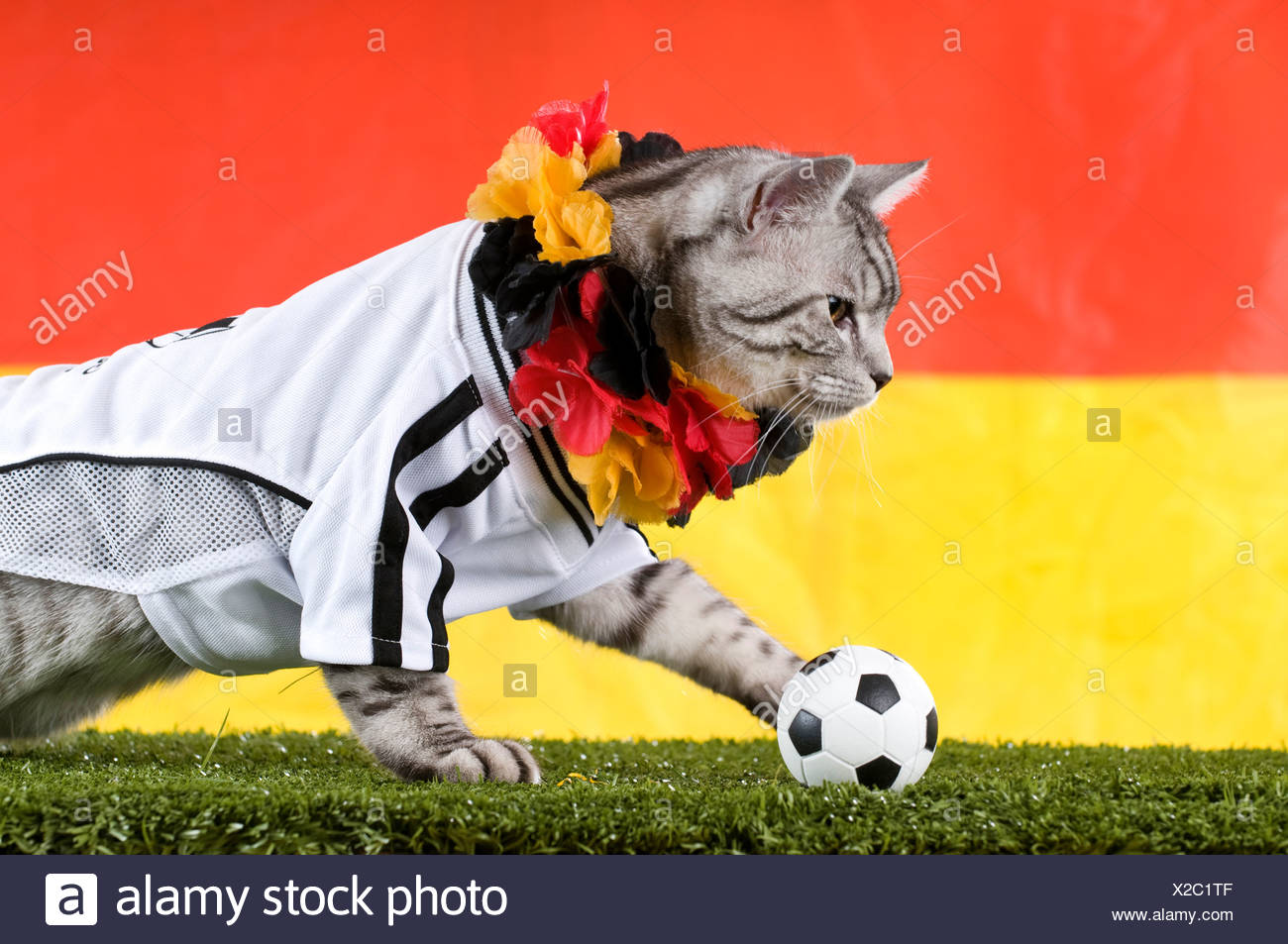 Tabby adult dressed in the jersey of the German National Football Team and  garland in the Germen national colours e8e32a706
